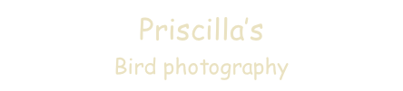 Priscilla's  
